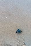 tartaruga-marinha-em-Trinidad-e-Tobago-16-