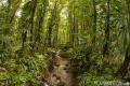 Rainy Forrest