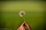 efeito-posterização-fotografia-4-1-.jpg