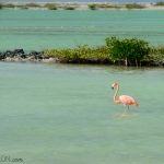 Pink salty flamingo